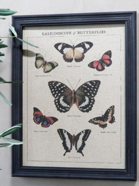 Billede m. sommerfuglemotiv & sort ramme - nr.1