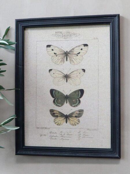 Billede m. sommerfuglemotiv & sort ramme - nr.2